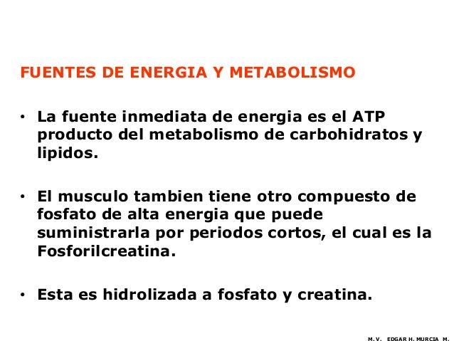 FUENTES DE ENERGIA Y METABOLISMO• La fuente inmediata de energia es el ATP  producto del metabolismo de carbohidratos y  l...