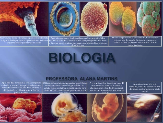 Na trompa o óvulo é fecundado pelo espermatozóide. Após a fecundação o óvulo fertilizado pelo espermatozóide é            ...