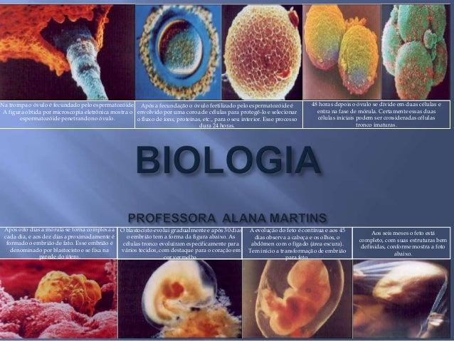Na trompa o óvulo é fecundado pelo espermatozóide.A figura obtida por microscopia eletrônica mostra oespermatozóide penetr...