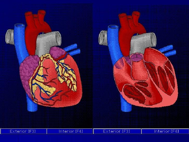 4   Cardiovascular Slide 3