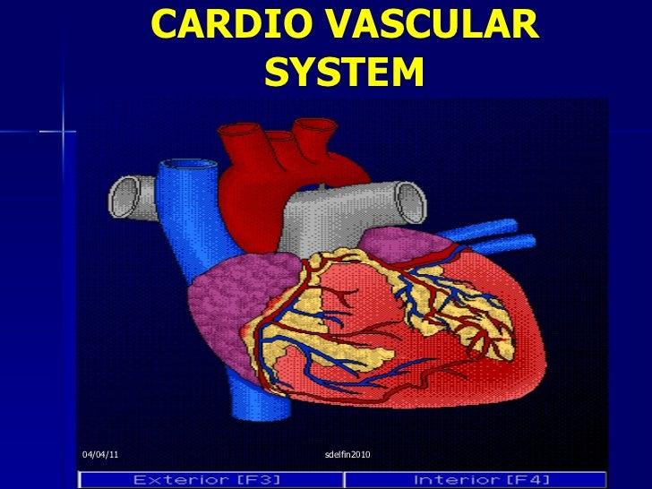 CARDIO VASCULAR SYSTEM 04/04/11 sdelfin2010