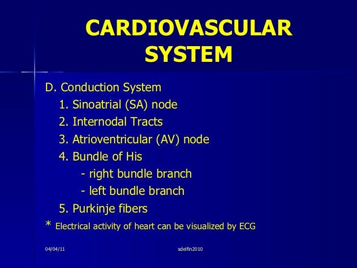CARDIOVASCULAR   SYSTEM <ul><li>D. Conduction System </li></ul><ul><li>1. Sinoatrial (SA) node </li></ul><ul><li>2. Intern...