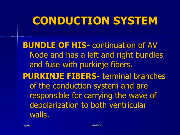 CONDUCTION SYSTEM <ul><li>BUNDLE OF HIS-  continuation of AV Node and has a left and right bundles and fuse with purkinje ...