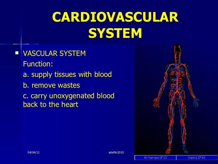 CARDIOVASCULAR   SYSTEM <ul><li>VASCULAR SYSTEM </li></ul><ul><li>Function:  </li></ul><ul><li>a. supply tissues with bloo...