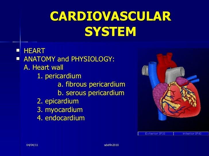 CARDIOVASCULAR  SYSTEM <ul><li>HEART </li></ul><ul><li>ANATOMY and PHYSIOLOGY: </li></ul><ul><li>A. Heart wall </li></ul><...