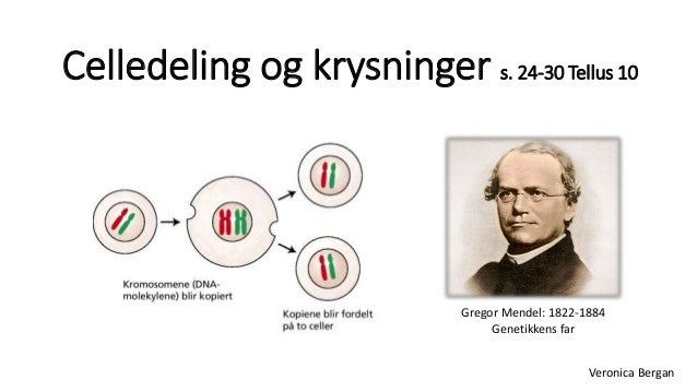 celledeling - YouTube