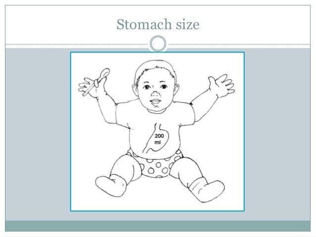 Stomach size
