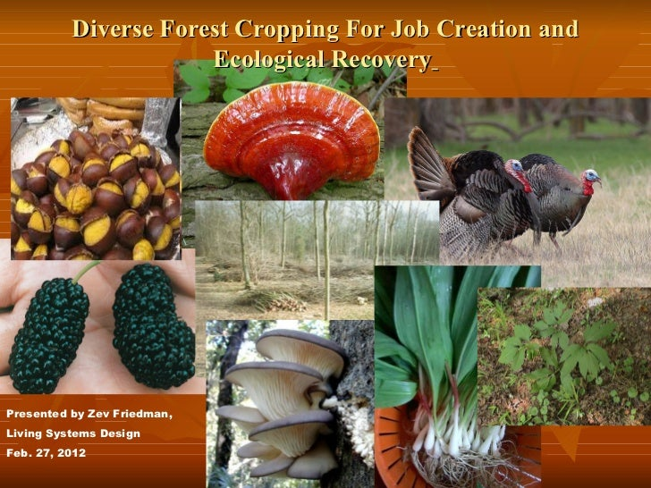 Diverse Forest Cropping For Job Creation and Ecological Recovery   Presented by Zev Friedman, Living Systems Design Feb. 2...