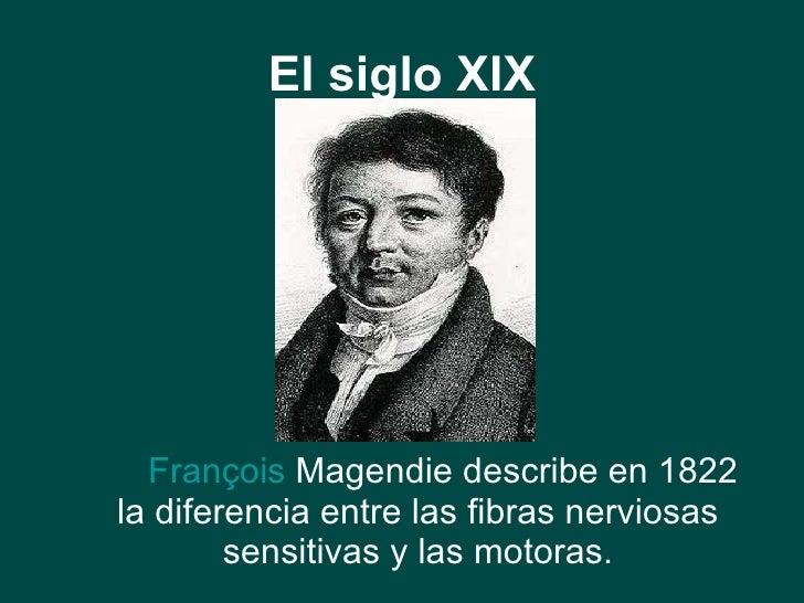 El siglo XIX <ul><li>François   Magendie  describe en 1822 la diferencia entre las fibras nerviosas sensitivas y las motor...