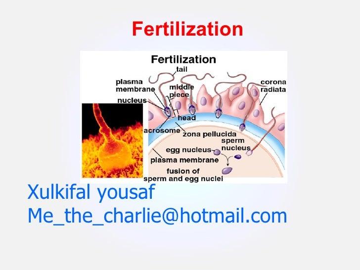 Xulkifal yousaf [email_address] Fertilization
