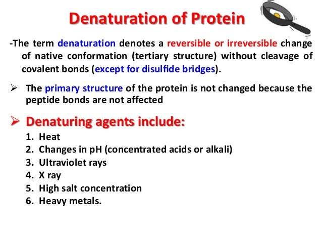 coagulation of proteins essay This research paper this experiment is conducted to study the effect of acid and salt on milk protein coagulation and to examine changes in colour and flavor of milk during heating and other 64,000+ term papers, college essay examples and free essays are available now on reviewessayscom.