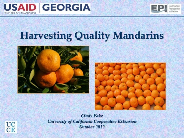 Harvesting Quality Mandarins Cindy Fake University of California Cooperative Extension October 2012