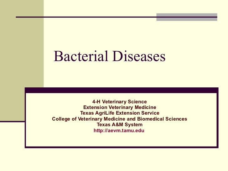 Bacterial Diseases 4-H Veterinary Science Extension Veterinary Medicine Texas AgriLife Extension Service College of Veteri...
