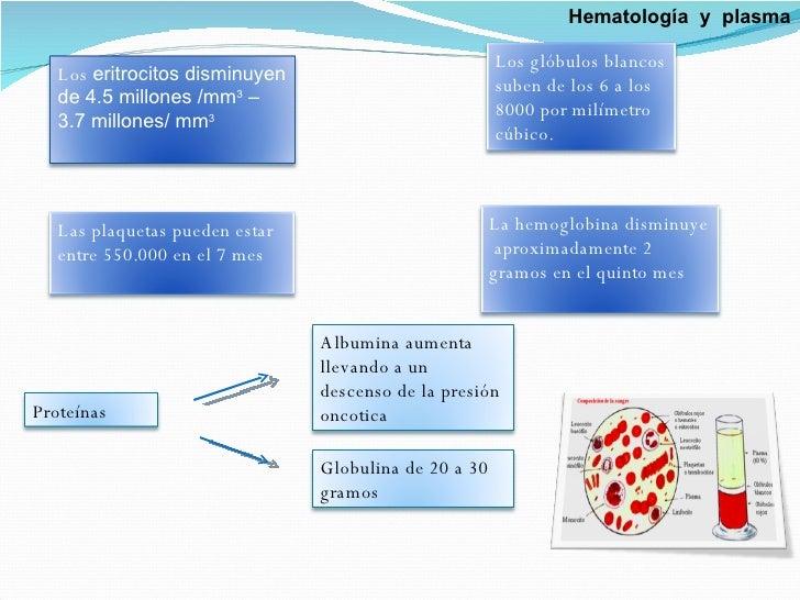 Hematología  y  plasma Los  eritrocitos disminuyen de 4.5 millones /mm 3  – 3.7 millones/ mm 3 Los glóbulos blancos  suben...