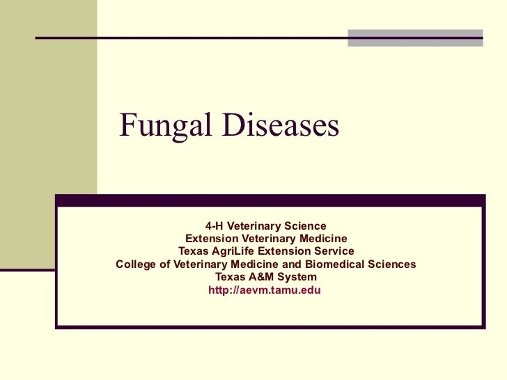 Fungal Diseases 4-H Veterinary Science Extension Veterinary Medicine Texas AgriLife Extension Service College of Veterinar...