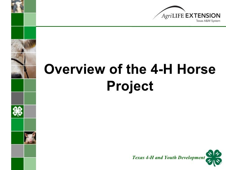 Overview of the 4-H Horse Project Texas 4-H and Youth Development