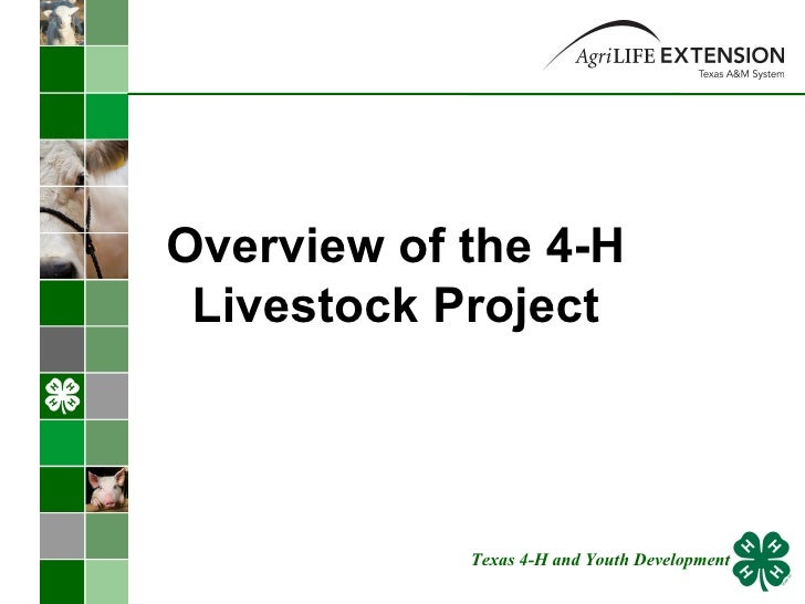 Overview of the 4-H Livestock Project Texas 4-H and Youth Development
