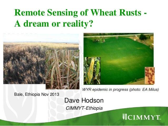 Remote Sensing of Wheat Rusts A dream or reality?  Bale, Ethiopia Nov 2013  Dave Hodson CIMMYT-Ethiopia