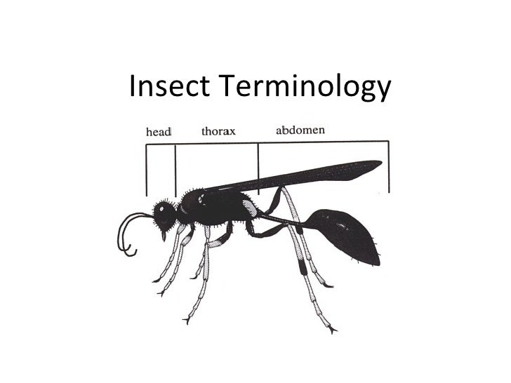 Insect Terminology