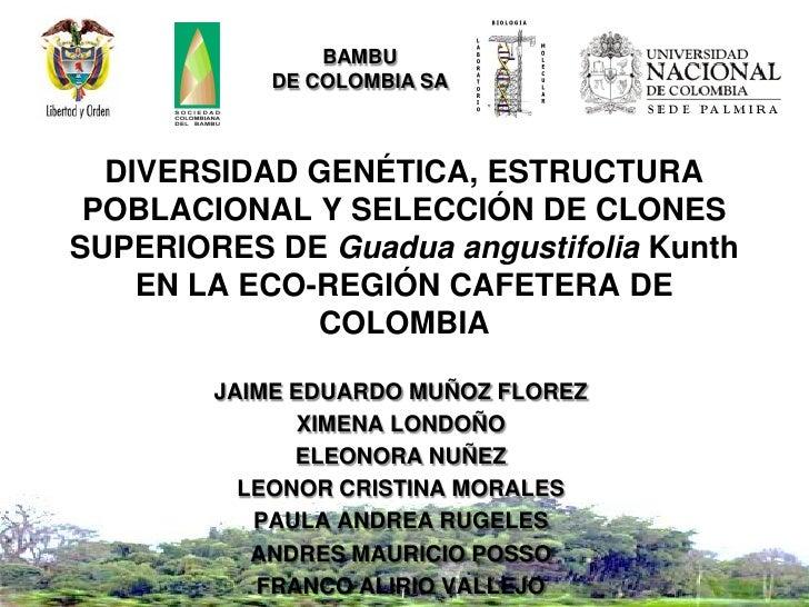 BAMBU            DE COLOMBIA SA  DIVERSIDAD GENÉTICA, ESTRUCTURA POBLACIONAL Y SELECCIÓN DE CLONESSUPERIORES DE Guadua ang...