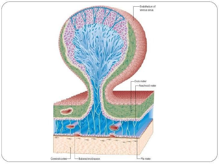 Meningesdural Venous Sinuses By Drtatheer Part 1
