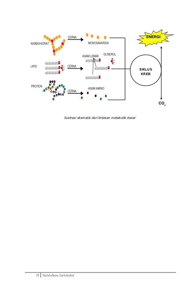 Jurnal Doc Pdf : metabolisme karbohidrat pdf
