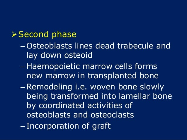 Second phase – Osteoblasts lines dead trabecule and lay down osteoid – Haemopoietic marrow cells forms new marrow in tran...