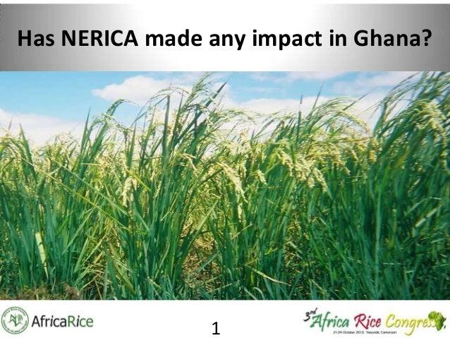 Has NERICA made any impact in Ghana?  1