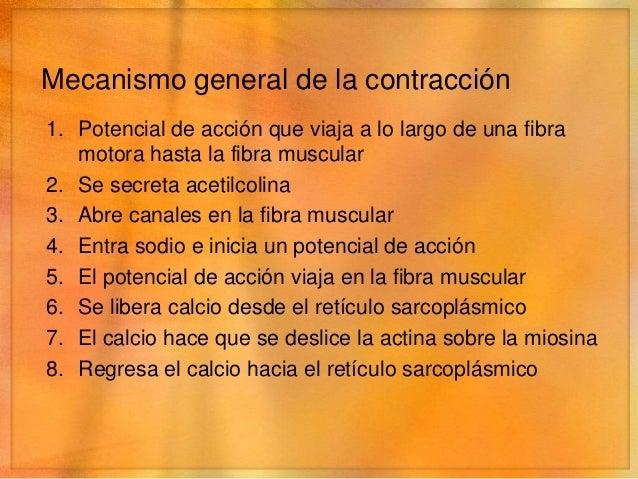 Mecanismo molecular de la contracción• Deslizamiento de los filamentos• Estado relajado   • Los extremos de los filamentos...