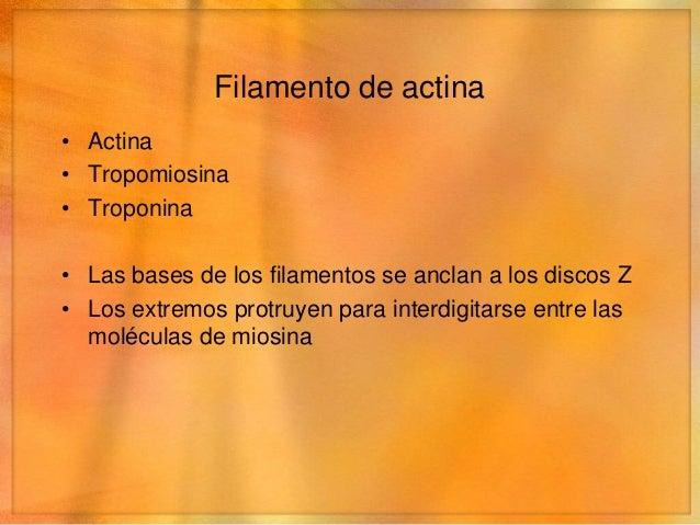 Filamento de actina• Tropomiosina   • En reposo recubren los puntos activos de la actina• Troponina   • Une la tropomiosin...