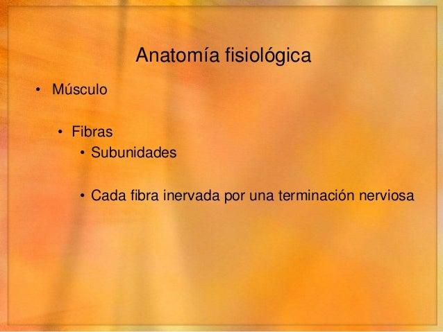 Anatomía fisiológica• Músculo  • Fibras     • Subunidades     • Cada fibra inervada por una terminación nerviosa