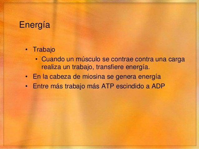 ATP          ADP• Activa el mecanismo de cremallera• Bombea calcio desde el sacroplasma hacia el retículo  sarcoplásmico (...