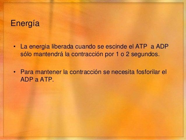 ADP          ATP• Fosfocreatina• Glucólisis – sin oxigeno, rápido.   • Glucógeno      • Àcido pirúvico      • Ácido láctic...