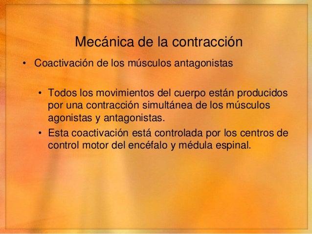 Remodelado del músculo• Hipertrofia   • Aumento de la masa total de un músculo   • Aumento del número de filamentos de act...