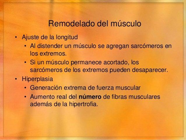 Remodelado del músculo• Atrofia   • Disminución de la masa total de un músculo   • Cuando un músculo no se utiliza, dismin...
