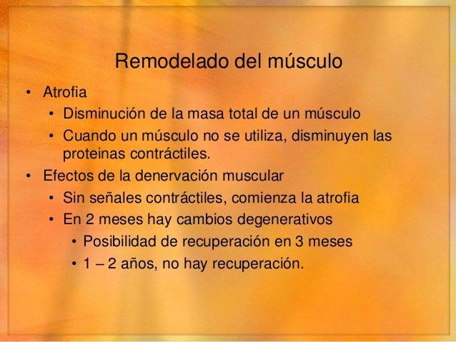 Remodelación del músculo• Atrofia   • Degeneración      • Sustitución del músculo por tejido fibroso y adiposo      • Cont...