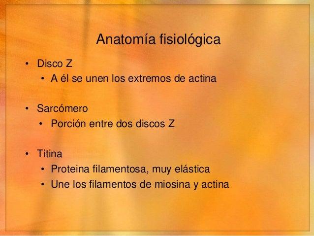 Anatomía fisiológica• Disco Z   • A él se unen los extremos de actina• Sarcómero  • Porción entre dos discos Z• Titina   •...