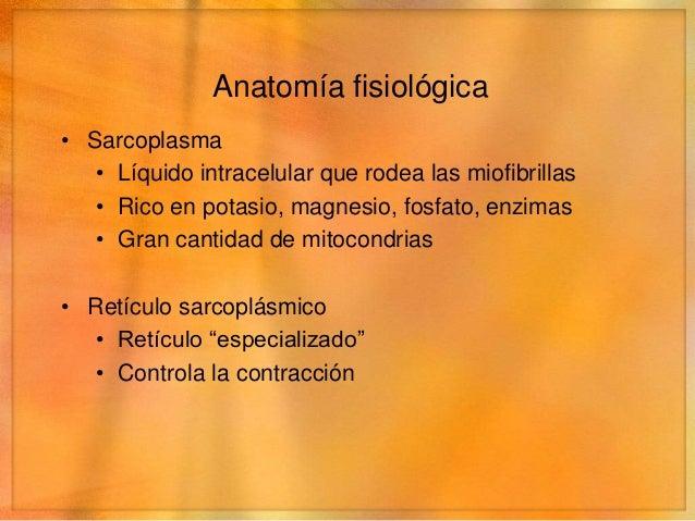 Anatomía fisiológica• Sarcoplasma   • Líquido intracelular que rodea las miofibrillas   • Rico en potasio, magnesio, fosfa...