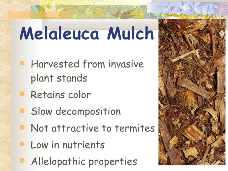 Cover-up: Which mulch is best for your garden? Here are pros and cons
