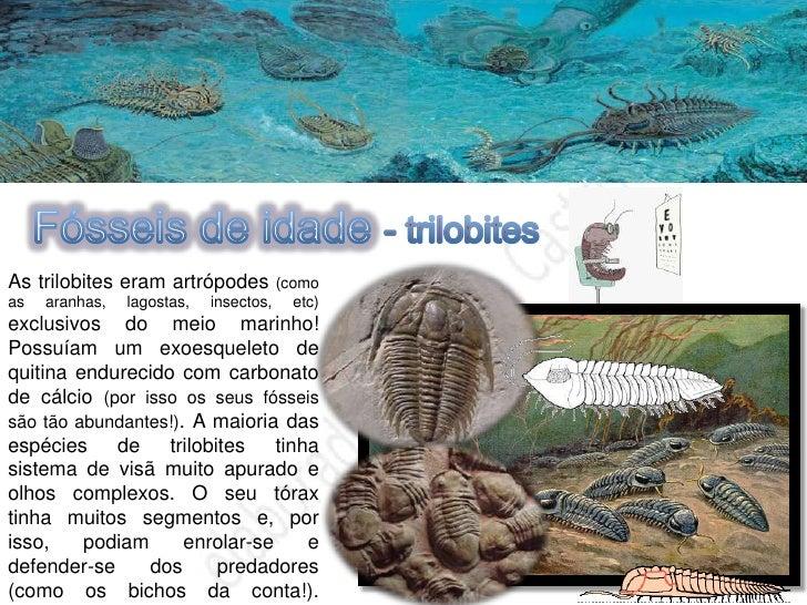 Mais informações sobre FÓSSEIS  Os corais estão entre as comunidades     marinhas mais antigas que se   conhecem - a sua h...
