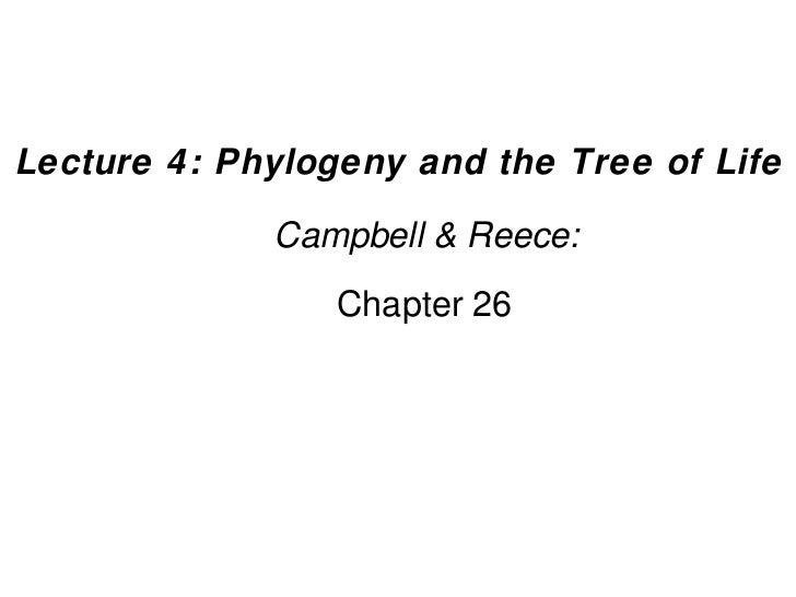 4 phylogeny-ch26
