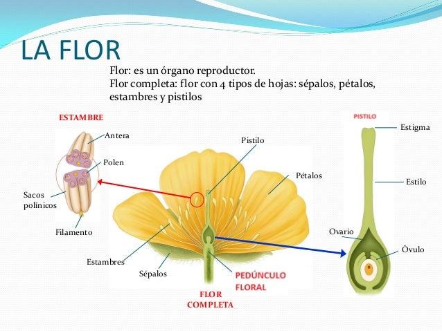 Tema 4. Plantas y Hongos