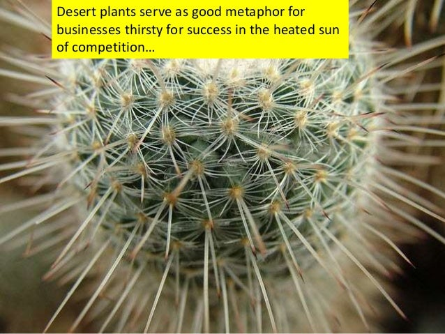 Desert plants serve as good metaphor for businesses thirsty for success in the heated sun of competition…