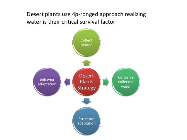 Desert plants use 4p-ronged approach realizing water is their critical survival factor Desert Plants Strategy Collect Wate...