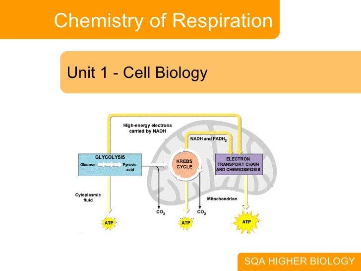 Chemistry of Respiration Unit 1 - Cell Biology SQA HIGHER BIOLOGY