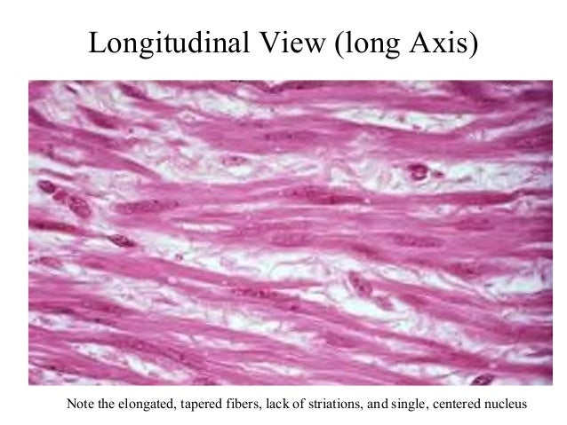 4. smooth muscle tissue