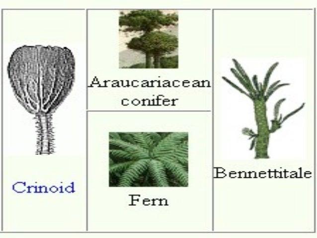 Triassic Period Plants Triassic-Jurass...