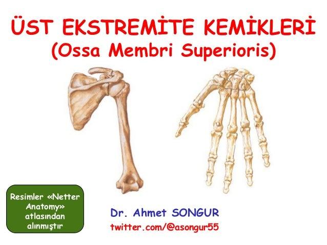 ÜST EKSTREMİTE KEMİKLERİ (Ossa Membri Superioris) Dr. Ahmet SONGUR twitter.com/@asongur55 Resimler «Netter Anatomy» atlası...