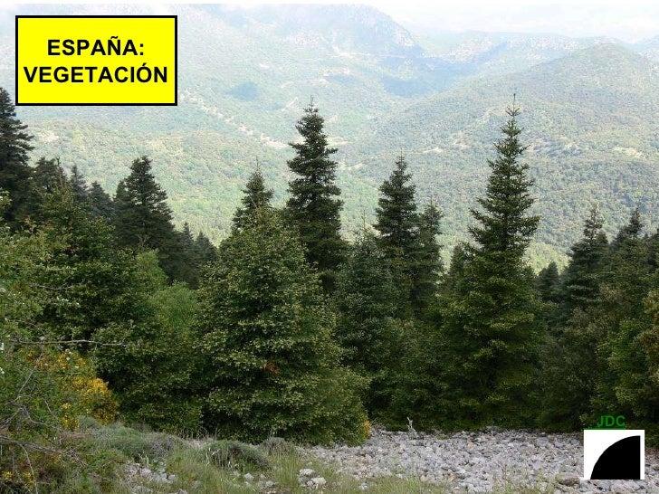 ESPAÑA: VEGETACIÓN