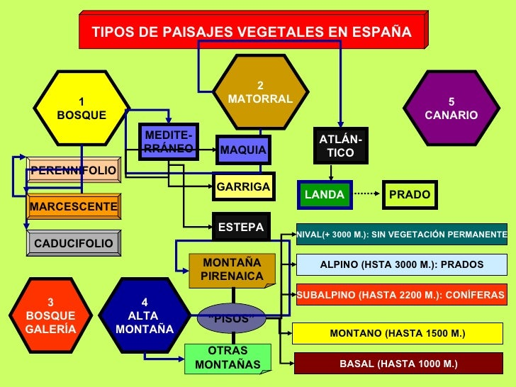 Espa a vegetacion - Pisos en estepa ...